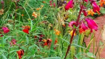 5 Top tips for a great garden design