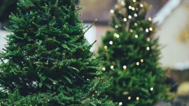 Christmas tree recycling ideas