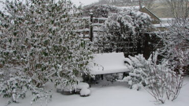 Tips and Tricks for your Garden in Winter (What not to do in Frosty Weather)