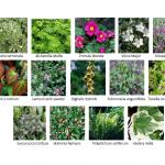 shade-plants11-150x150