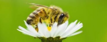 How to create a Bee Friendly Garden and why it is important
