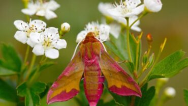 Not Just Bees – Pollinating creatures in your garden and what they like.